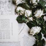 rose-2591291_1280